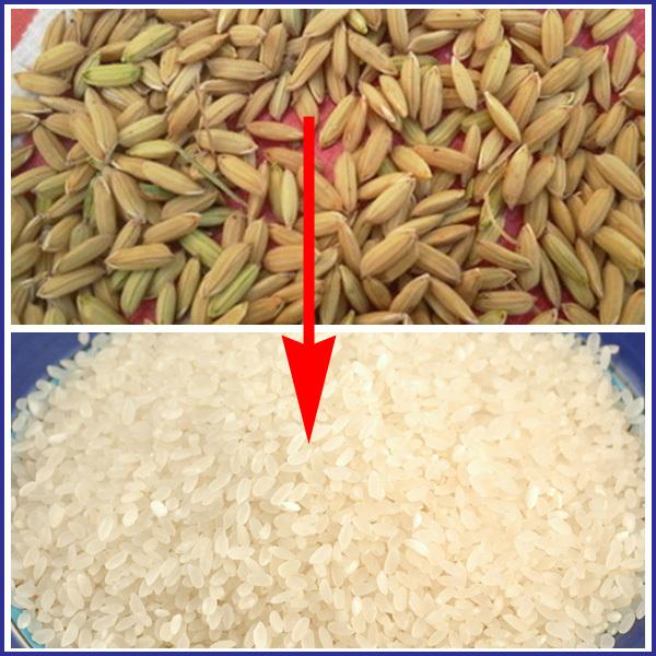 paddy rice mill machine in Nigeria