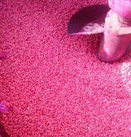 seed coating machine
